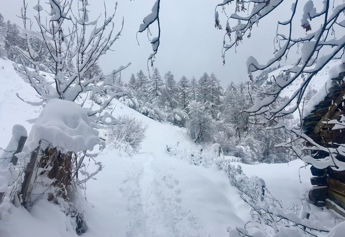 Snowy walk 5 Snow Cold Temperature Nature Tree Tranquility Outdoors Snowing Iphoto