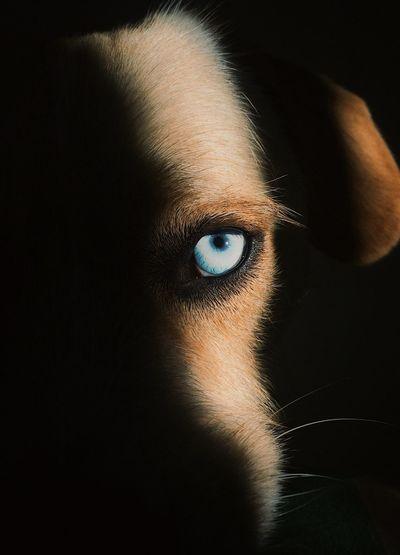 Cropped Image Of Dog