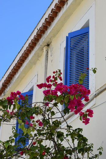 Greek islands' architecture Greek Islands Architecture Beauty In Nature Blue Blue Sky Building Building Exterior Built Structure Day Flower Flower Head Flowering Plant Freshness Greece Growth House Low Angle View Nature No People Outdoors Pink Color Plant Sky Travel Destinations Window