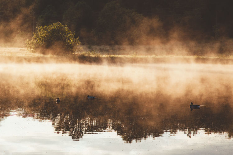 Ducks On Lake In Foggy Weather