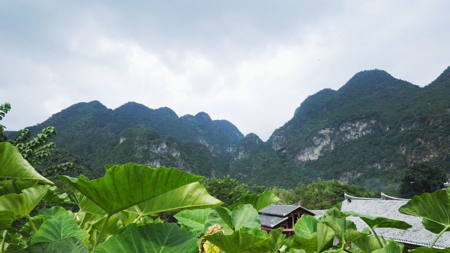 Mountain Tranquil Scene Scenics Leaf Sky Beauty In Nature Non-urban Scene Tranquility Green Color Mountain Range Cloud - Sky Plant Nature Majestic Growth Tourism Green Outdoors Rock Formation Remote
