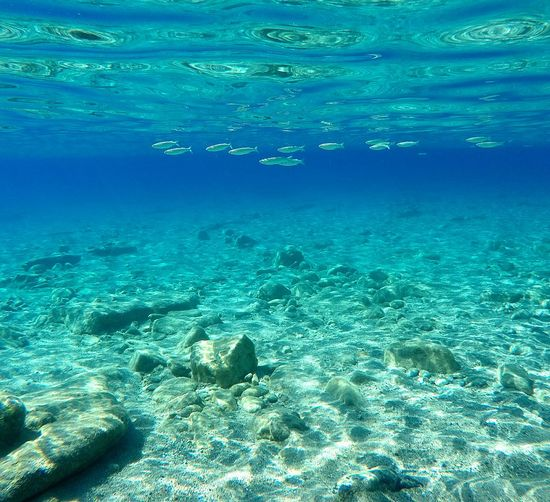 Sea UnderSea