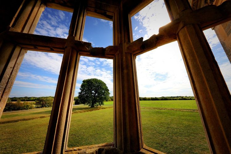 Trees on field seen through window