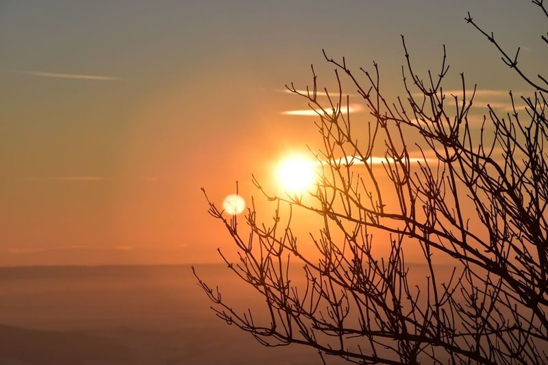 Silhouette Of Tree Against Sunset Sky