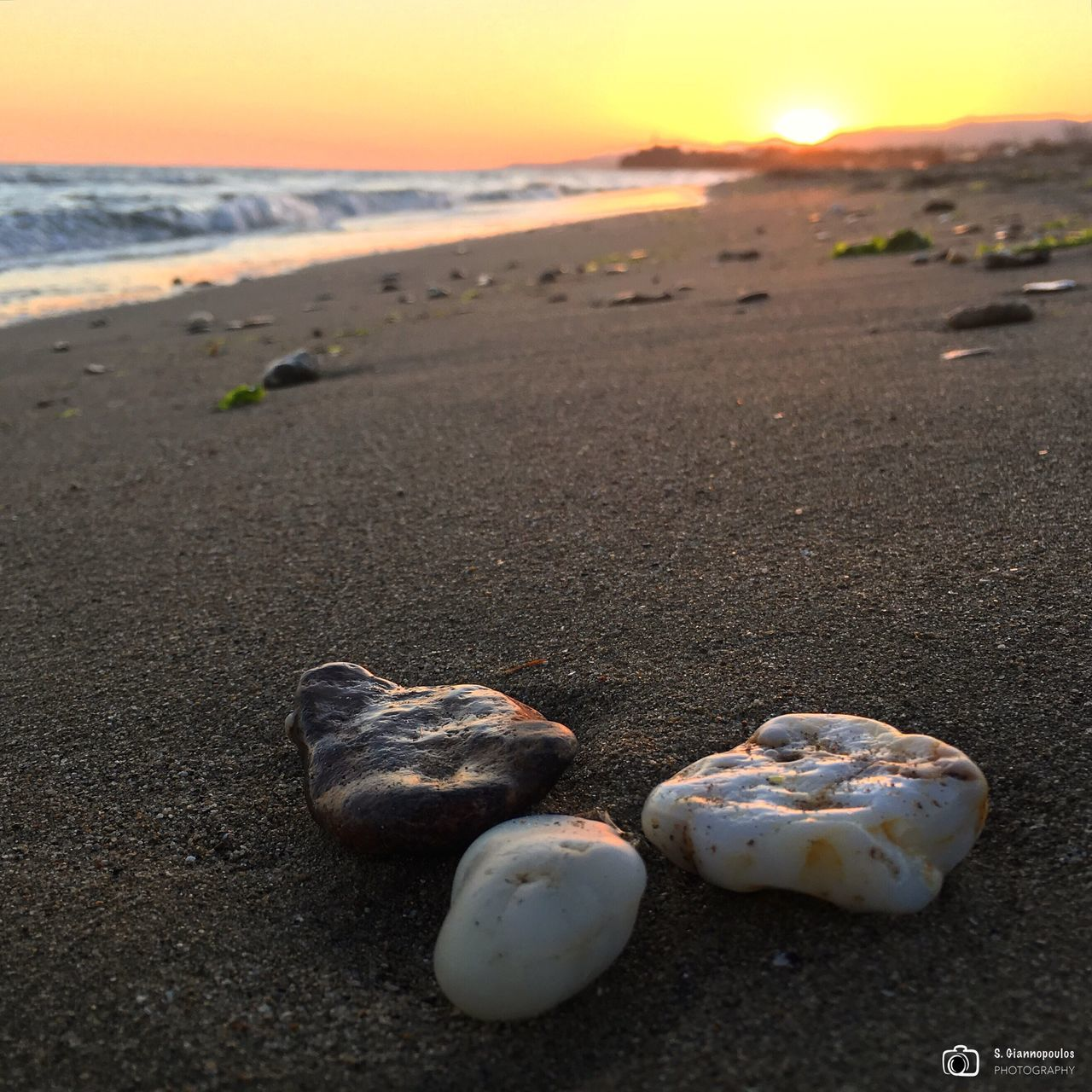 beach, shore, sand, sea, sunset, nature, beauty in nature, outdoors, no people, horizon over water, tranquility, water, scenics, day, close-up, sky, animal themes, pebble beach