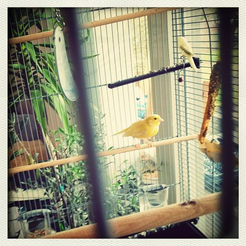 (there's a) world outside my window.... chirp Canary Bird World Outside My Window I Want To Break Free✨