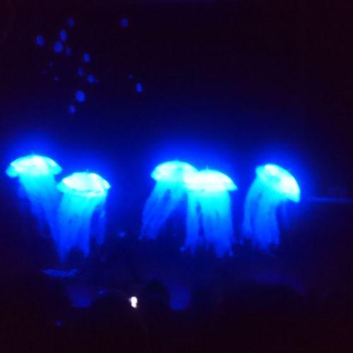 Illuminated Blue