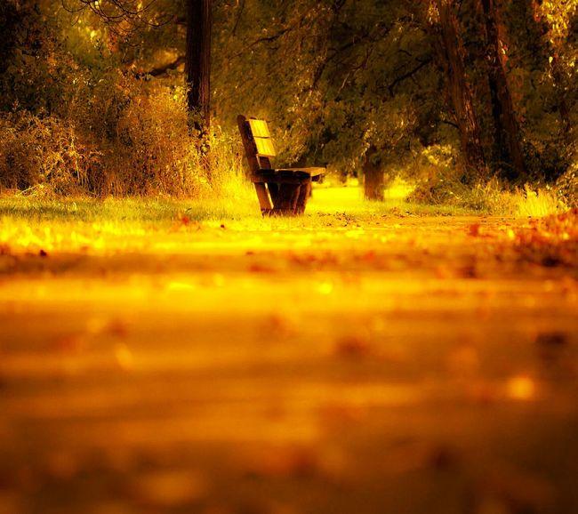 Alone among colors.
