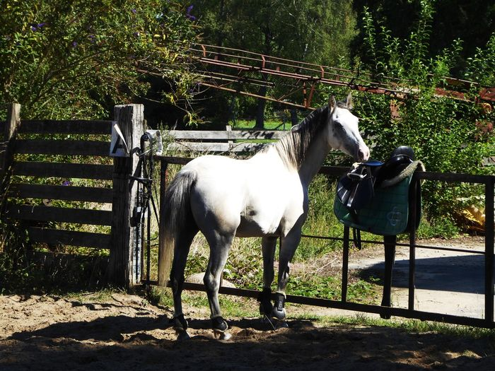 I love my neighbors 😍 My Neighborhood Kissed By The Sun Beauty In The Sun Light Beauty In Nature Simple Beauty Simple Photography For My Friends🙄🙋♀️ Beautiful Summerday Happy Moment♥ Lucky Me🦄 Thankful🦄 Tree Standing Shadow Horse