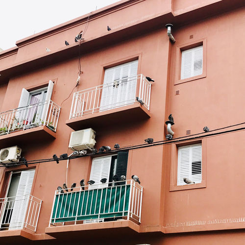 Window Pigeon