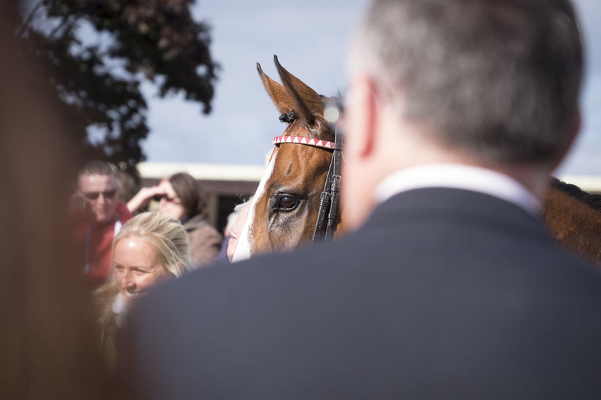 Horse's eye Horse Horse Ears Horse Eye Horse Race Horse Races Horse Racing Thoroughbred Thoroughbredhorse