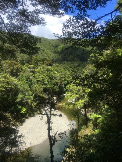 Scenic view of the river below Kaitoke River Below River View River Tree Nature Beauty In Nature Forest Green Color Tranquility Lush Foliage Outdoors Water
