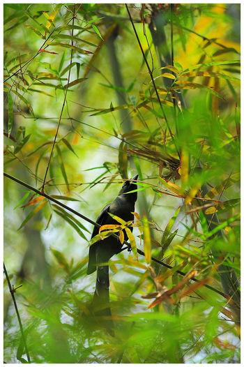 Bird Bamboo