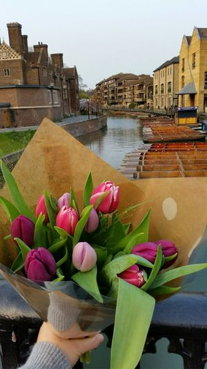 Cambridge England In Love Spring Colours Flowers Tulips Tulipseason Tulipanes 🌷 Focus Object