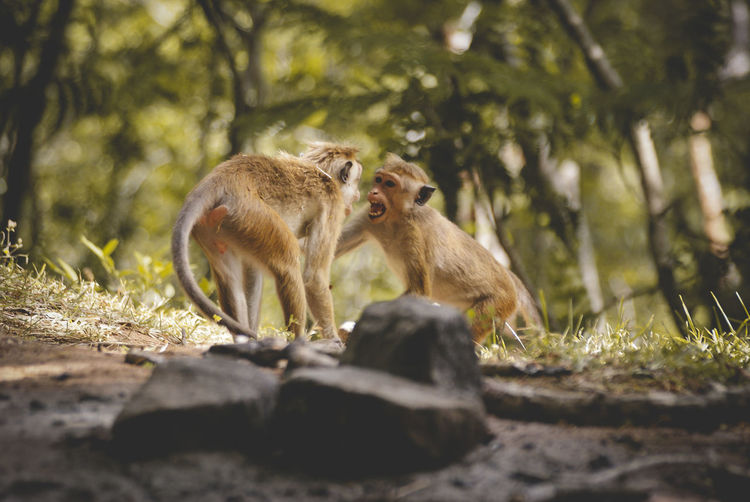 Monkeys in forest