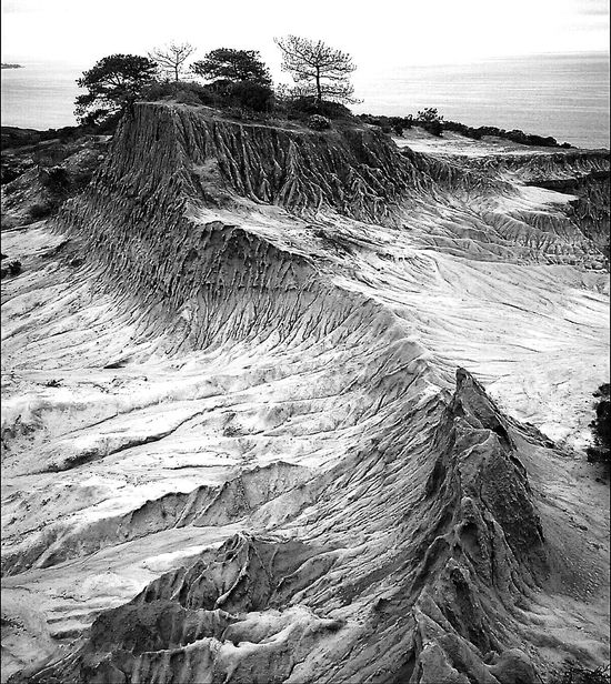 There are trees on Mars Landscape Black And White Outerspace