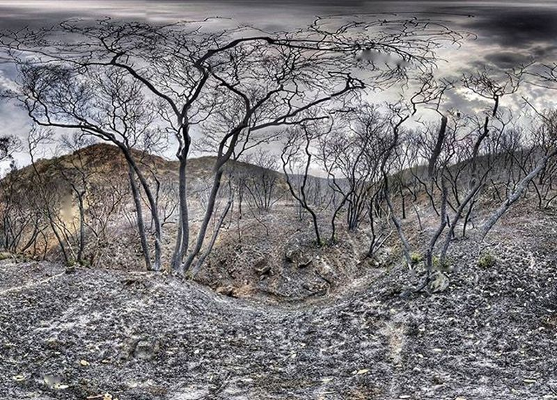 Scorched Earth ...Wraggfire Fireseason Fire Dry Drought Tree Black Death California Water