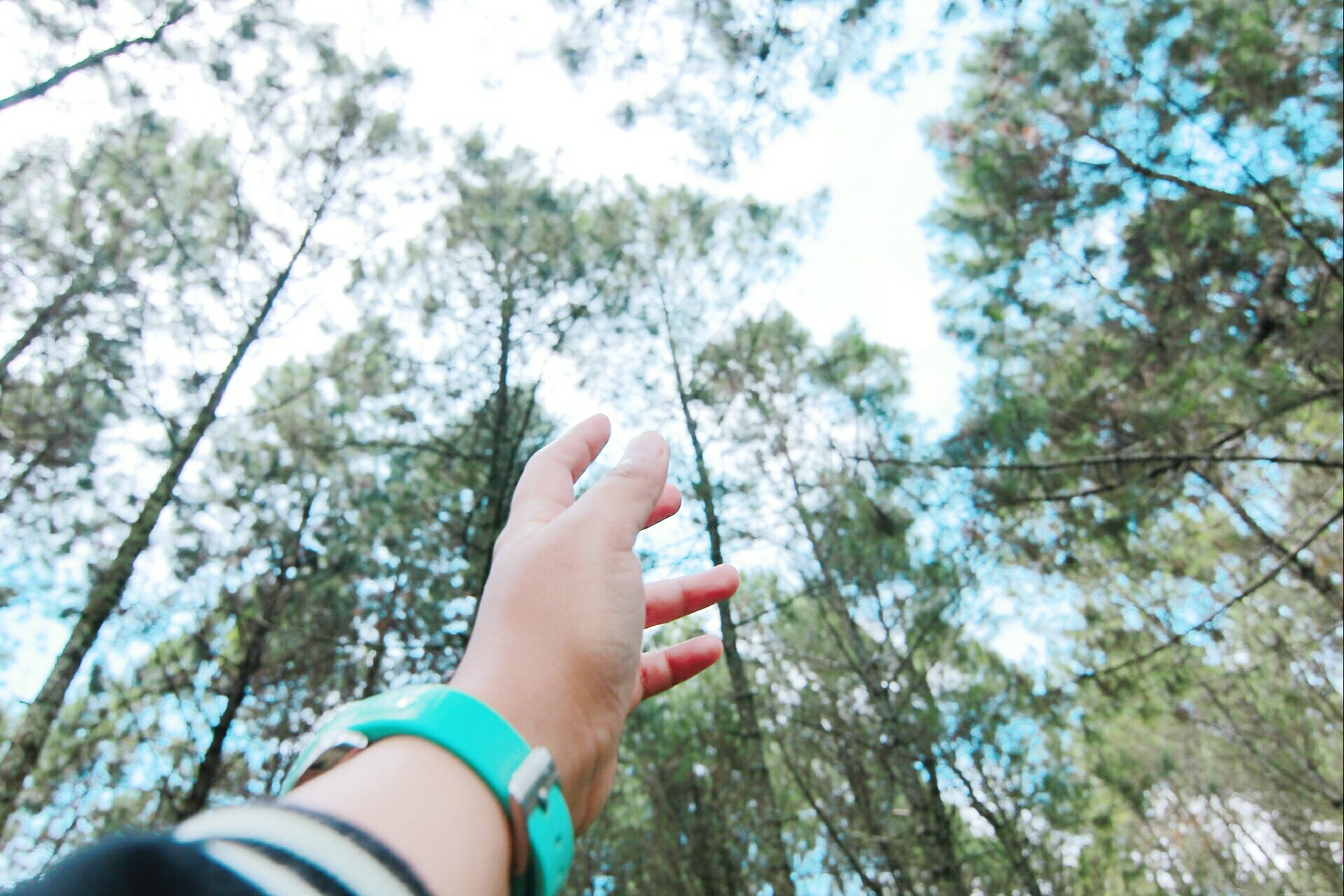 one person, nail polish, personal perspective, one woman only, human body part, lifestyles, human hand, tree, only women, low angle view, real people, outdoors, day, leisure activity, forest, women, adults only, people, nature, adult, close-up, sky