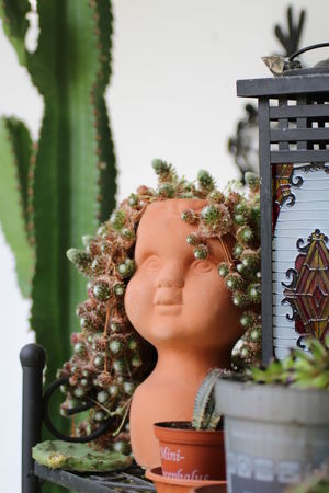 Plant Contemplation One Person Headshot Tree Figurine  People Flower Nature Indoors  Day Close-up