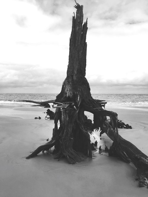 Bone Yard Jekyll Island Driftwood Blackandwhite Peaceful