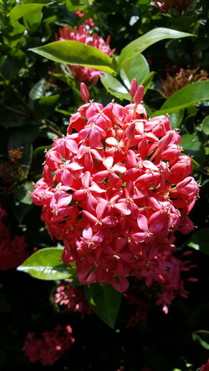 Florals Hawaii Pink Pink Color Flowers Hello World Check This Out Enjoying Life