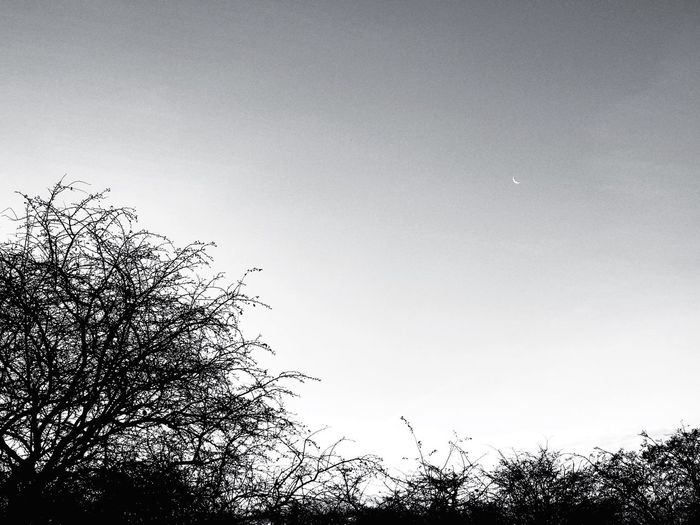 Tree Low Angle View Sky Nature Beauty In Nature No People Growth Tranquility Outdoors Clear Sky Scenics Branch Day Moon ShotOnIphone Shotoniphone7 Eyemphotography Beauty In Nature Landscape Nature Silhouette Blackandwhite Minimalistic