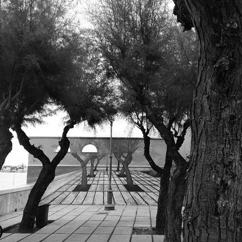 #lungomare #trani #apulia #adriatico #igersapulia #instapuglia Adriatico Apúlia Trani Lungomare Instapuglia Igersapulia