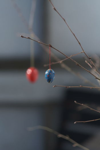 Close-up of easter eggs hanging on branch