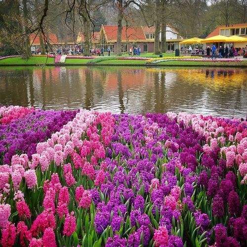 Keukenhof is amazing, even I was there this year bit early, it was still worth it?#keukenhof #holland #flowerfileds #tulips ????????? Capture_today Mashpics Holland Top_masters From_city Tulips Pro_shooters Qx100 Keukenhof Vitaminwatercolour Vintique Flowerfileds Igersholland Allshots_ Ic_cities Gramoftheday Mokummagazine Insta_holland Igholland