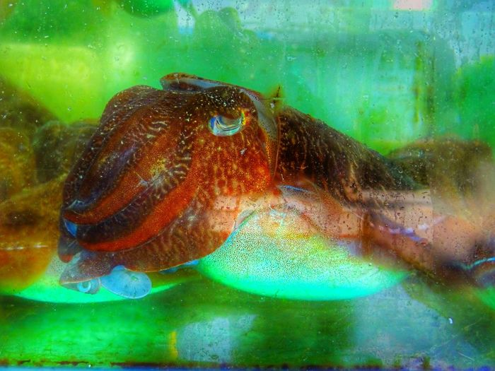 Water Animal Themes Underwater Close-up Animals In The Wild Mammal Check This Out 😊 Octupus 🌈⭐🌠🌍🌞