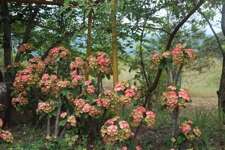 Pink flowering plant in forest