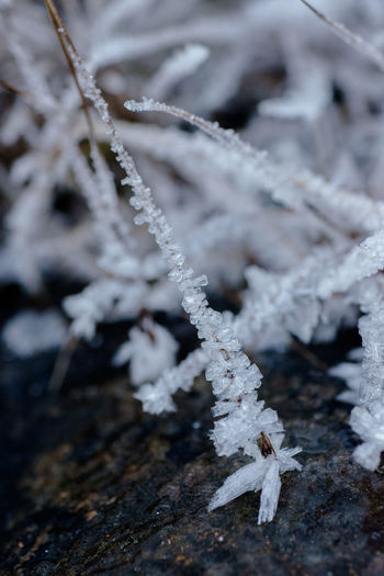 Close-Up Of Ice Crystal On Dry Grass