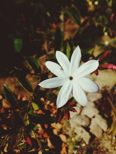 -Beauty of white flower in winter and colored background First Eyeem Photo