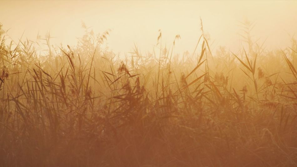 Zwielicht Nature Photography Beauty In Nature Reinheimer Teich Sunrise Sunrise Silhouette Silhouettes Yellow Foggy Morning My Point Of View My Place To Relax Rural Scene Field Sky Grass Plant Close-up Countryside