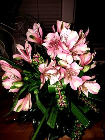 Beauty In Nature Flower Wildorchid Orchids Friends Gift Orhideja Divljaorhideja