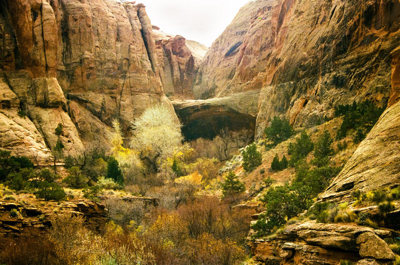The arch at the end of Grandstaff Canyon, Utah. Moab  Utah Autumn Beauty In Nature Canyon Day Film Photography Grandstaff Landscape Mountain Mountain Range Nature No People Outdoors Scenics Sky Tranquil Scene Tranquility Tree