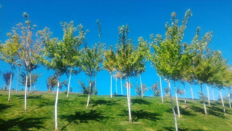 Tree Blue Clear Sky Green Color Grass Beauty In Nature Nature Green Sky Türkiye Doğa Mavigökyüzü Agaclar Trees Konya Grass
