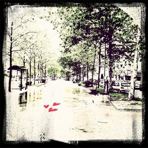 la avenida de los corazones olvidados