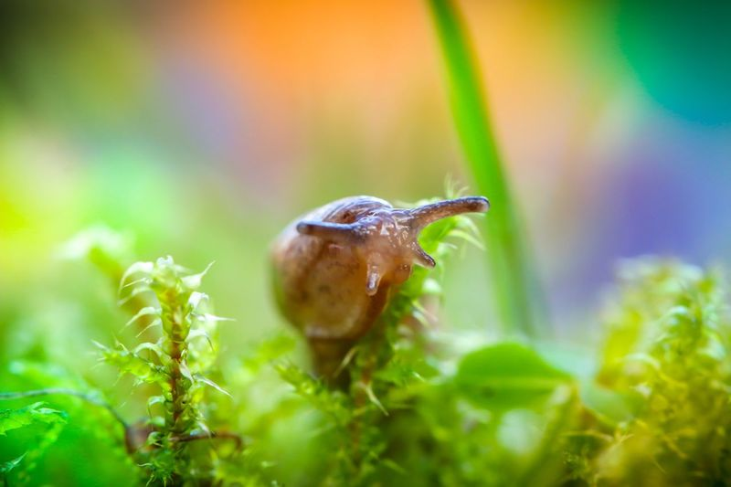 🐌 Snigel Slug Snail FUNNY ANIMALS Macro Photography Flowers,Plants & Garden Flower Photography Canon 100mm Canon 70d Macro Canon Animal Themes Animal Wildlife Animals In The Wild Animal One Animal Invertebrate Insect No People Green Color Close-up Nature Animal Body Part