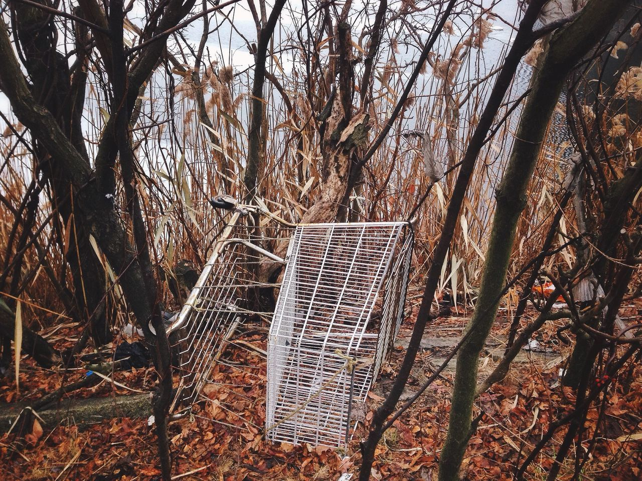 Shopping cart in a forest