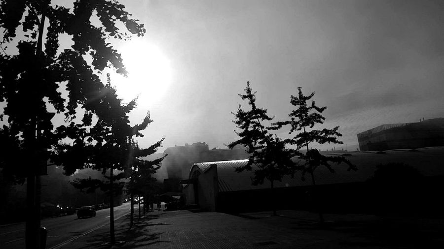 Niebla Coruña Galicia Sain Tree Branch Silhouette Built Structure Growth Building Exterior Leaf Architecture Flower Low Angle View Sky Sun Plant Tree Trunk Day Nature No People Back Yard Treetop Niebla Blackandwhite Trees