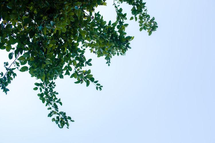Blätter Beauty