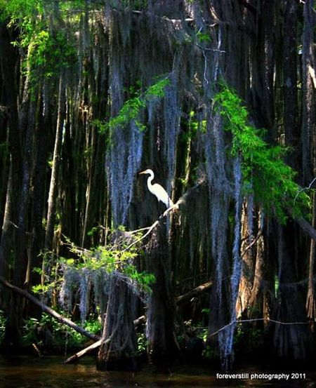 Caddo Lake Uncertain, TX Floating Down The Cannals Of Caddo Lake Beauty In Nature One Of My Favorite Places On Earth!