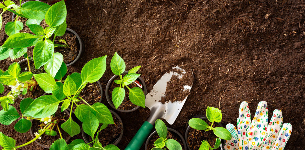 Top View of gardening tools and seedlings on soil Leaf Plant Part Plant Growth Dirt Nature Beauty In Nature Green Color Directly Above No People High Angle View New Life Gardening Beginnings Close-up Freshness Mud Seedling Flower Food Outdoors Planting Herb Leaves Garden Gardening Tools Seeding Farming Dig It