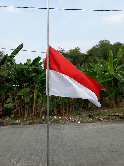 Flag Red Patriotism Tree Day No People Outdoors Politics And Government Nature Sky Indonesia Flag Indonesia Flags