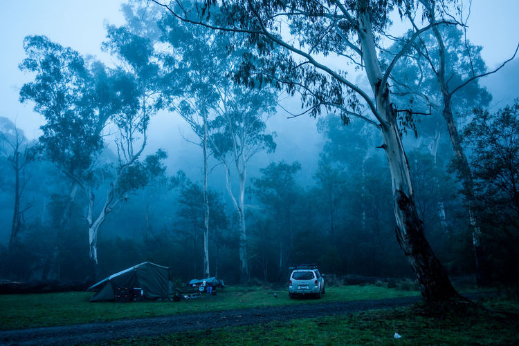 Early foggy morning at campsite Campsite Howqua Howqua Hill Howqua River Sheepyard Bare Tree Beauty In Nature Branch Camping Day Fog Foggy Grass Landscape Nature No People Outdoors Sky Tent Tree