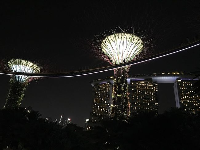 Singapore Illuminated Night Architecture Tree Built Structure Sky Low Angle View City Building Exterior Plant No People Nature Connection Glowing Lighting Equipment Outdoors Bridge Bridge - Man Made Structure Travel Destinations Light Nature Travel Modern Architecture