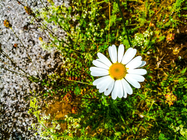 Flower head Flower Nature Petal Fragility Freshness Flower Head Growth White Color Beauty In Nature Day Plant Outdoors No People Leaf Close-up Blooming Bosna I Hercegovina Bosna ♡ Bosnia And Herzegovina Sarajevobosnia Sarajevo Bosnahersek Bosna Travel Destinations Galaxy