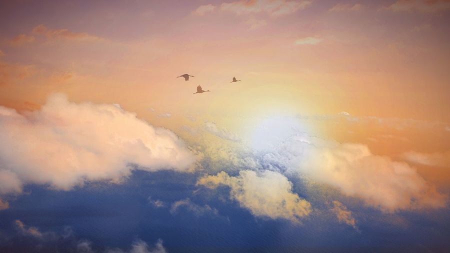 Low angle view of birds flying in sky