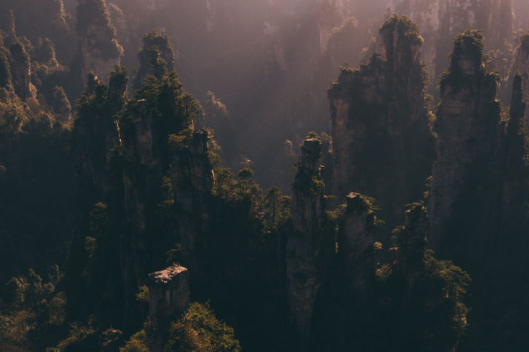 Tree Plant Beauty In Nature Scenics - Nature Land Forest Nature Mountain No People Growth Tranquility Non-urban Scene Outdoors Environment Idyllic Fog Avatar Mountain WuLingYuan Wulingyuan Scenic Area Rock Formation ASIA